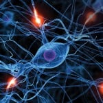 Art of Neuroscience Competition for Scientists and Artists Worldwide, 2017