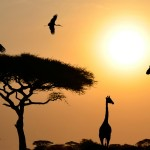 United Nations World Wildlife Day Photo Competition Fully Funded to USA, 2017