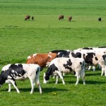 Livestock Emissions Abatement Research Network